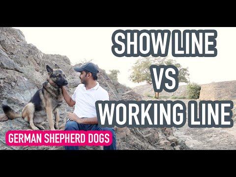 Show line VS Working line German Shepherd Dogs