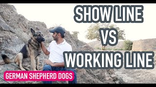 Show line VS Working line German Shepherd Dogs