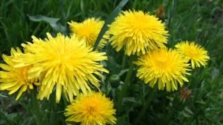 Maienzeit - Blütenzeit