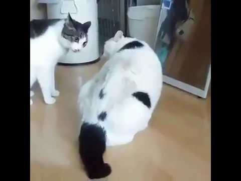Fat Cat Stops Its Friends From Fighting