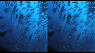 Wild Ocean 3d trailer Side By Side 3D