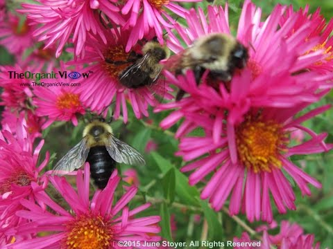 Dr Chris Connolly Discusses Impact of Neonicotinoids On Bee Brains and Colony Health