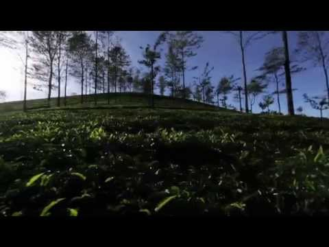 Garden Fresh Tea by Avataa Tea, Coimbatore