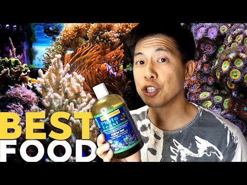 Heavy Feeding Corals And Fish? {Chubby But Happy}