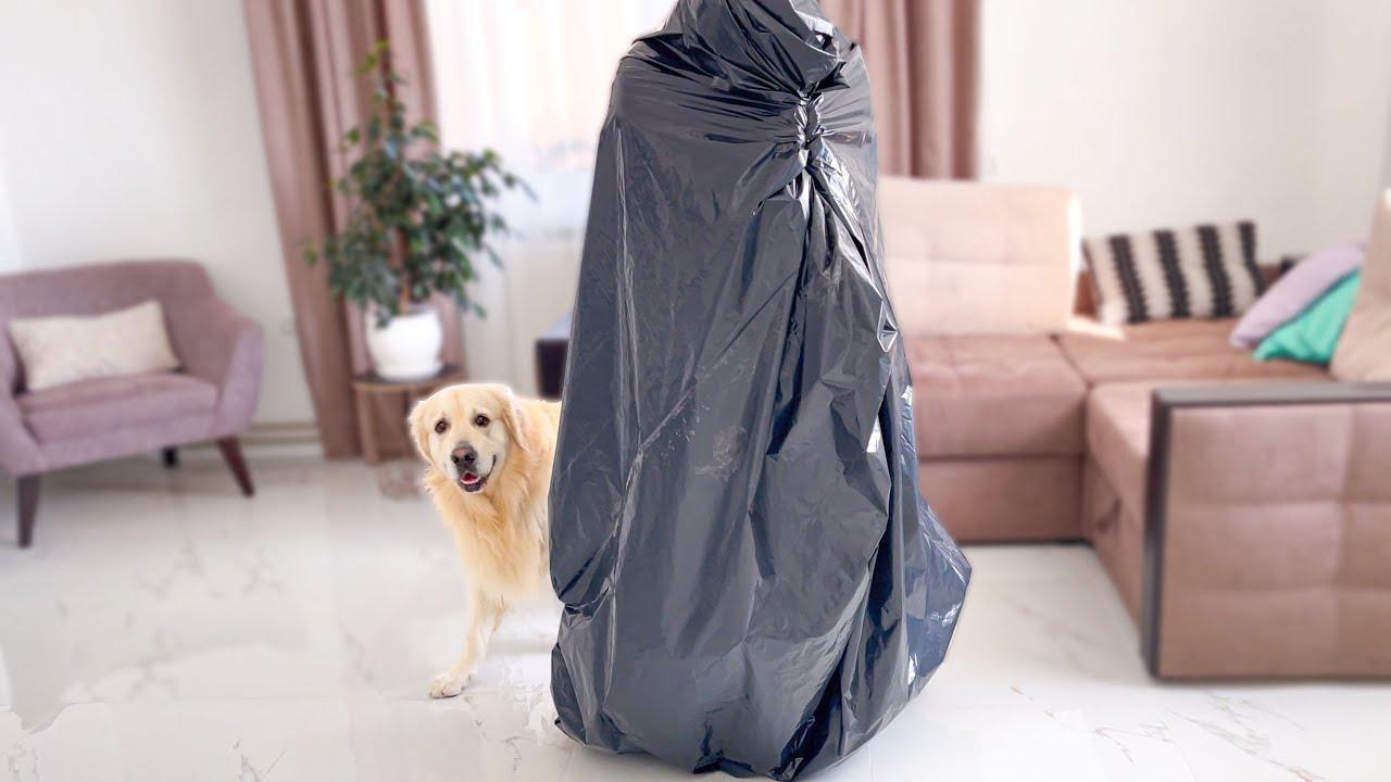 Hiding from my Golden Retriever under black plastic bag