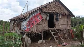 Aktivitas Di Pondok Ladang Kami Suku Dayak(Gadis Dayak) Part1
