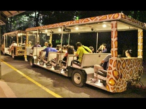 Night Safari, Singapore, HD Experience