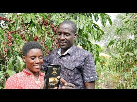 Bio-Kaffee aus Uganda - Eine Kurzreportage für die GEPA