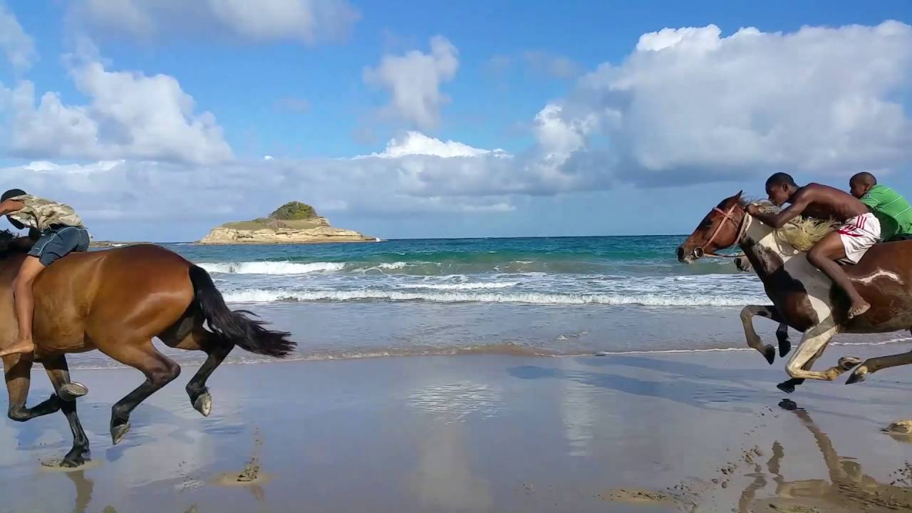 Horseback Riding In St Lucia With Atlantic Ss Les You