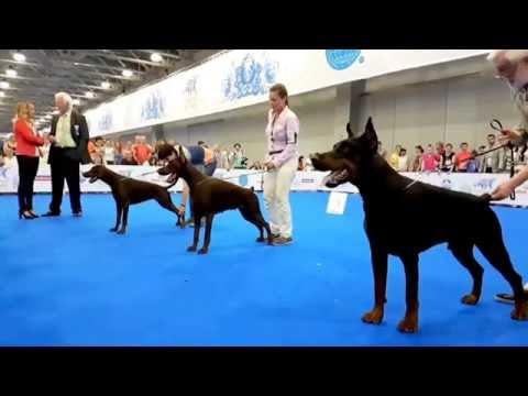 World Dog Show 2016 - Dobermann - BOB election