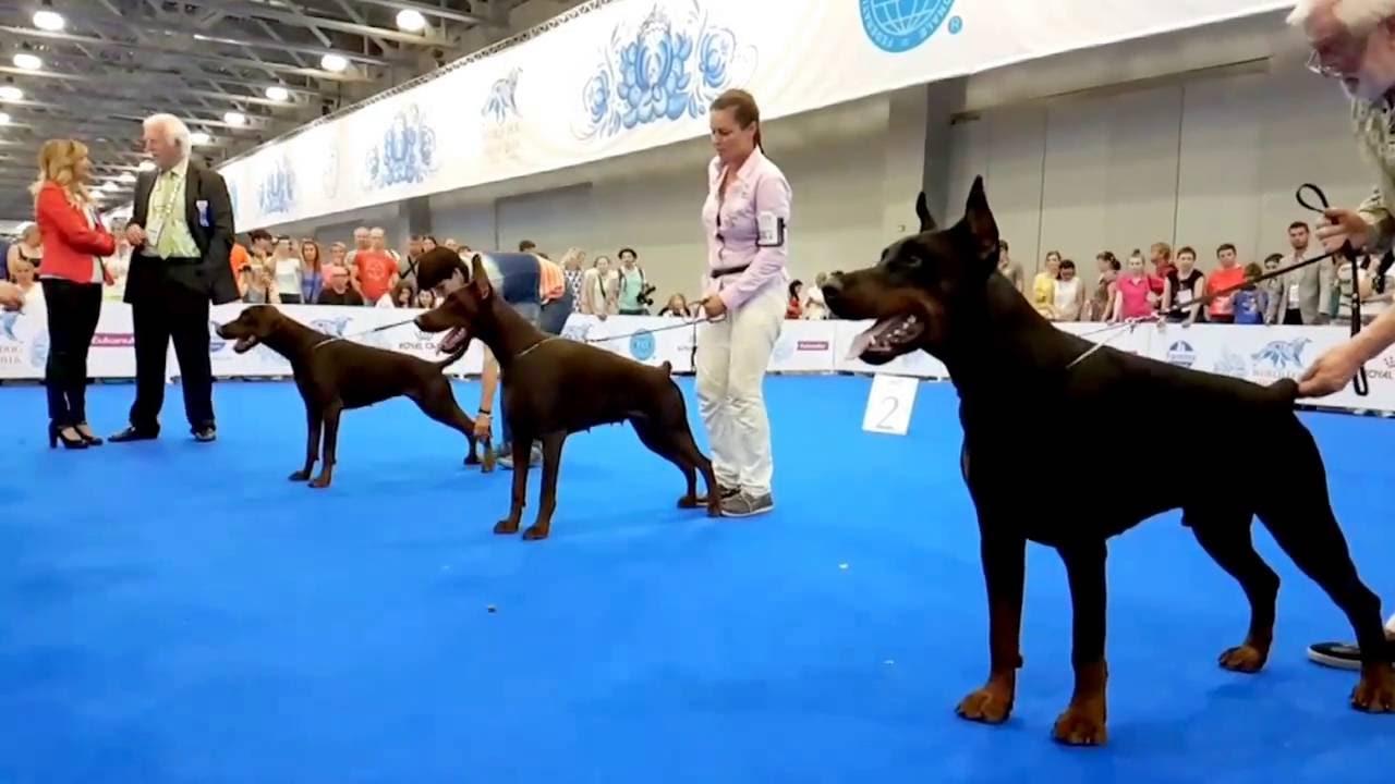 World Dog Show (World Dog Championship) in 2018 78