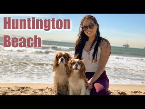 BEST OFF LEASH DOG BEACH   Huntington Beach
