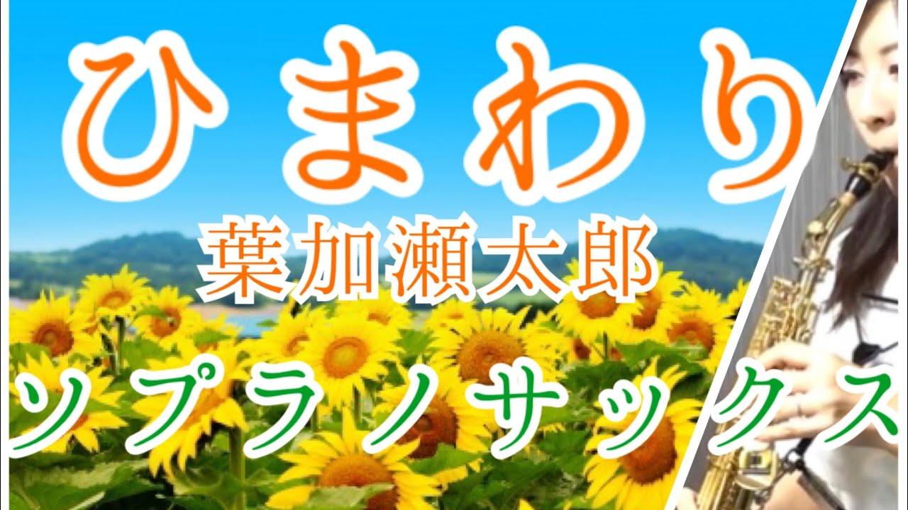 加瀬 太郎 ひまわり 葉