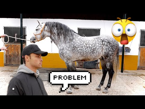 HORSE SHOPPING FOR A BEAUTIFUL STALLION (Day 2)