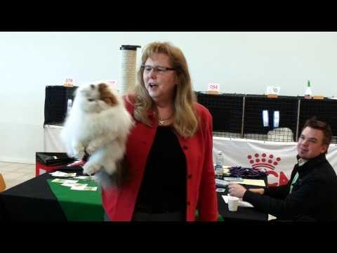 CFA CAT FANCIERS OF FINLAND 14-15.03.2015, Riihimaki, CFA CH PL*Jantar Miss Betty Boop