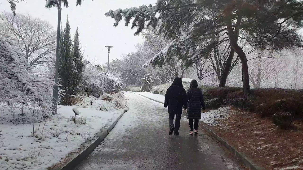 2020년 12월 13일 일산호수공원 첫 눈  오는날