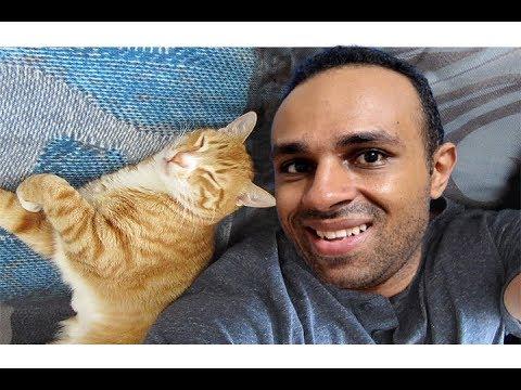 قطتى اجمل قطة شقية كسرت البيت عشان تهرب منه !!