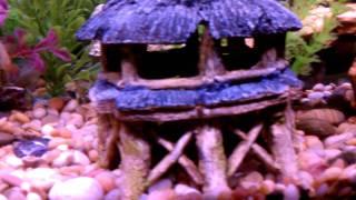 clean fish tank 36 gallon part 1