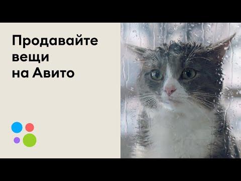 Кот ни в чём не виноват