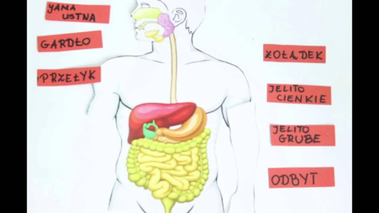 Schemat budowy układu pokarmowego  film animowany uczniów   -> Kuchnia Kaflowa Schemat Budowy