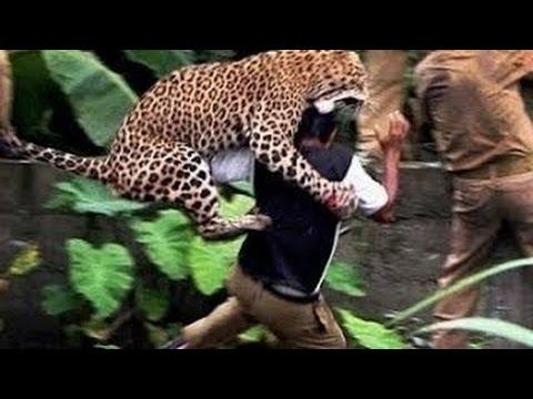 Popular Videos - National Geographic Abu Dhabi & Animals