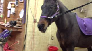 Popular Videos - Saddle & Pony