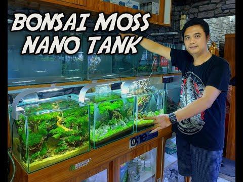 bonsai-moss-aquasacape-simple-tank-nano