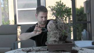 How To Bonsai - Create Root Over Rock