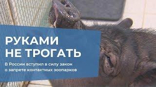 Смотреть видео В России вступил в силу закон о запрете контактных зоопарков онлайн