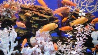 How to Pick a Fish Tank Heater | Aquarium Care
