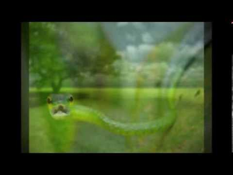Sneaky Snake (Tom T. Hall)