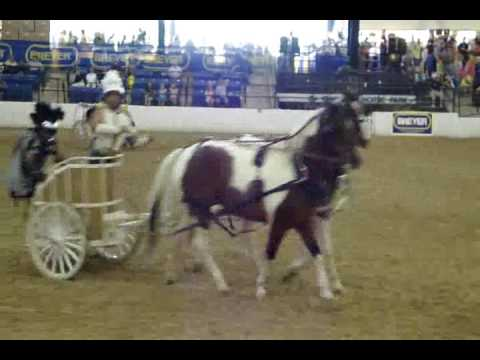 BreyerFest 2009 - Chariot Races! - Equine Extremist Entertainment-