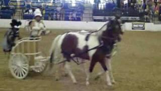BreyerFest 2009 - Chariot Races! - Equine Extremist Entertainment-