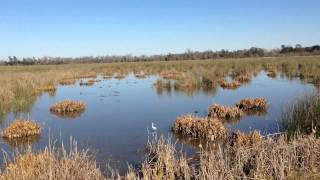 cattail marsh tyrrell park beaumont tx bicycle trails part 1