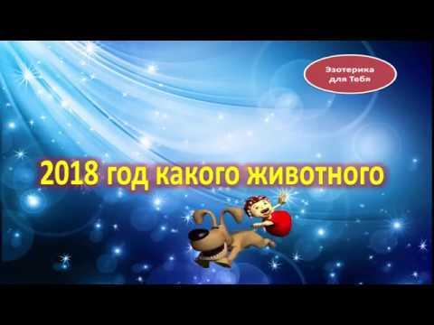 2018 год какого животного по календарю