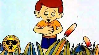 Мультфильмы: Мальчик и лягушонок