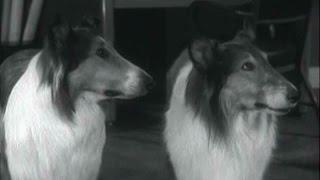 Lassie - Episode #401 -