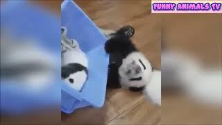 ПОДБОРКА СМЕШНЫХ ЖИВОТНЫХ. Смотреть всем! ☺✧ A selection of funny animals. See all