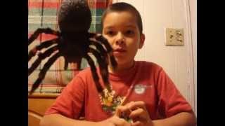 giant spider attacks kids
