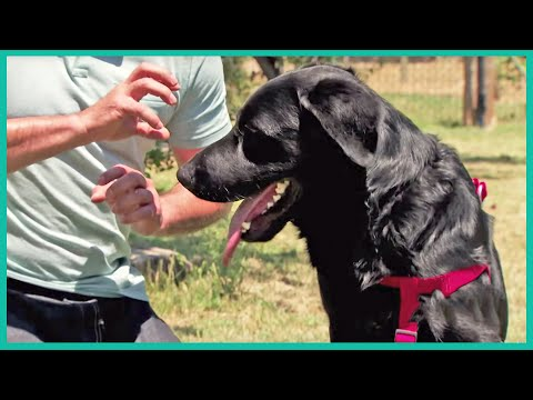 Meet Jet: A Labrador Mix Having Problems Getting Adopted | Cesar Millan's Leader Of The Pack