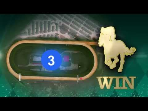 Betting win place and show binary options magnet scams involving
