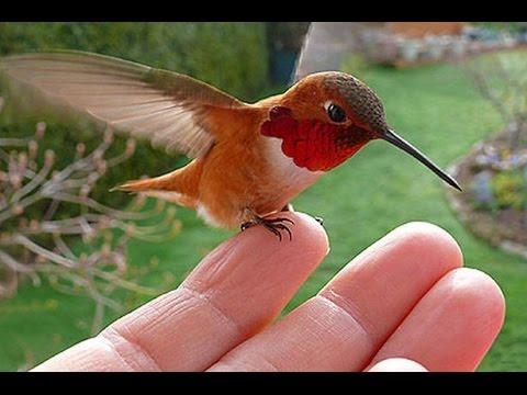 Playing With Hummingbirds