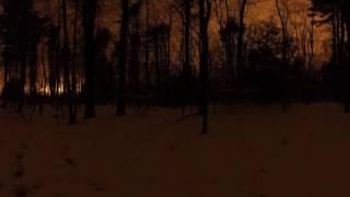 Harvard Forest Night Sky (360 spherical)