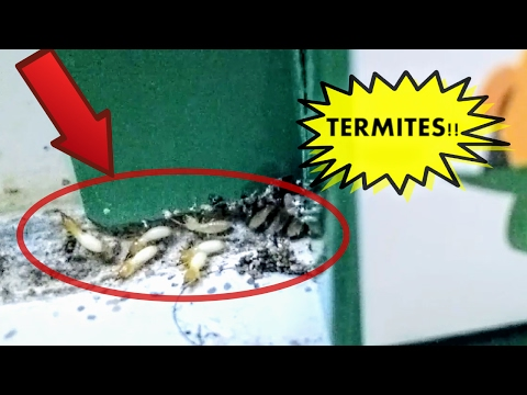 Termite Treatment How To Do It Yourself
