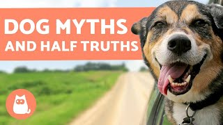 10 MYTHS and HALF-TRUTHS about DOGS that Will Surprise You