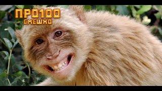 Смешные моменты из жизни животных! Смешно до слез! Смотреть всем!