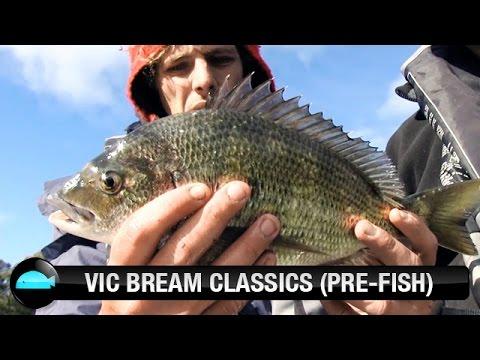 Bream Lure Fishing Tournament Prefish | We Flick Fishing Videos