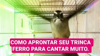 COMO APRONTAR SEU TRINCA FERRO PARA ELE CANTAR MUITO...
