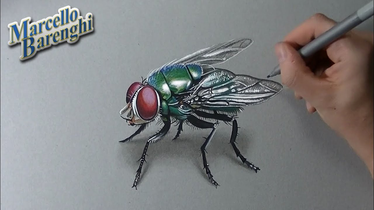 Uncategorized How To Draw Flies how to draw a 3d fly youtube