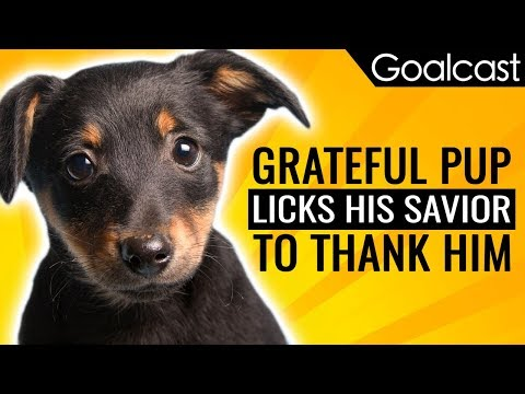 Grateful Pup Licks His Savior to Thank Him | Inspiring News | Goalcast